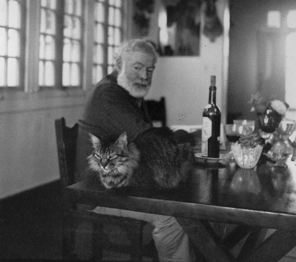 Ernest Hemingway looks at his cat sitting near him on the table at the Finca Vigia, Cuba. Photographer unknown in the John F. Kennedy Presidential Library and Museum, Boston (fair use)
